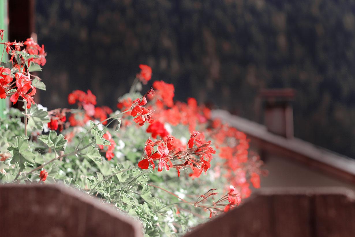 Balkon Blumen Südtirol