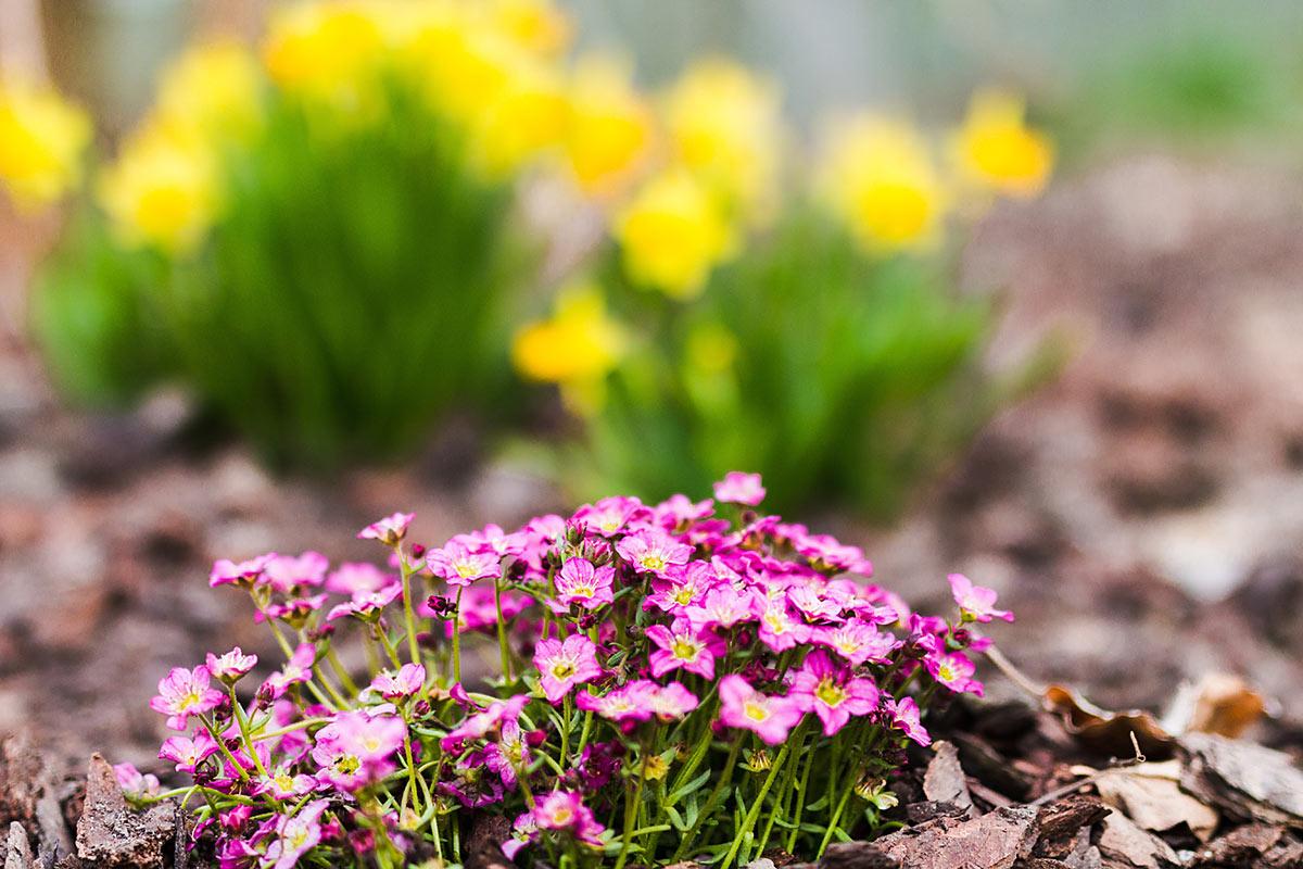 Frühlings Blüten in Völlan