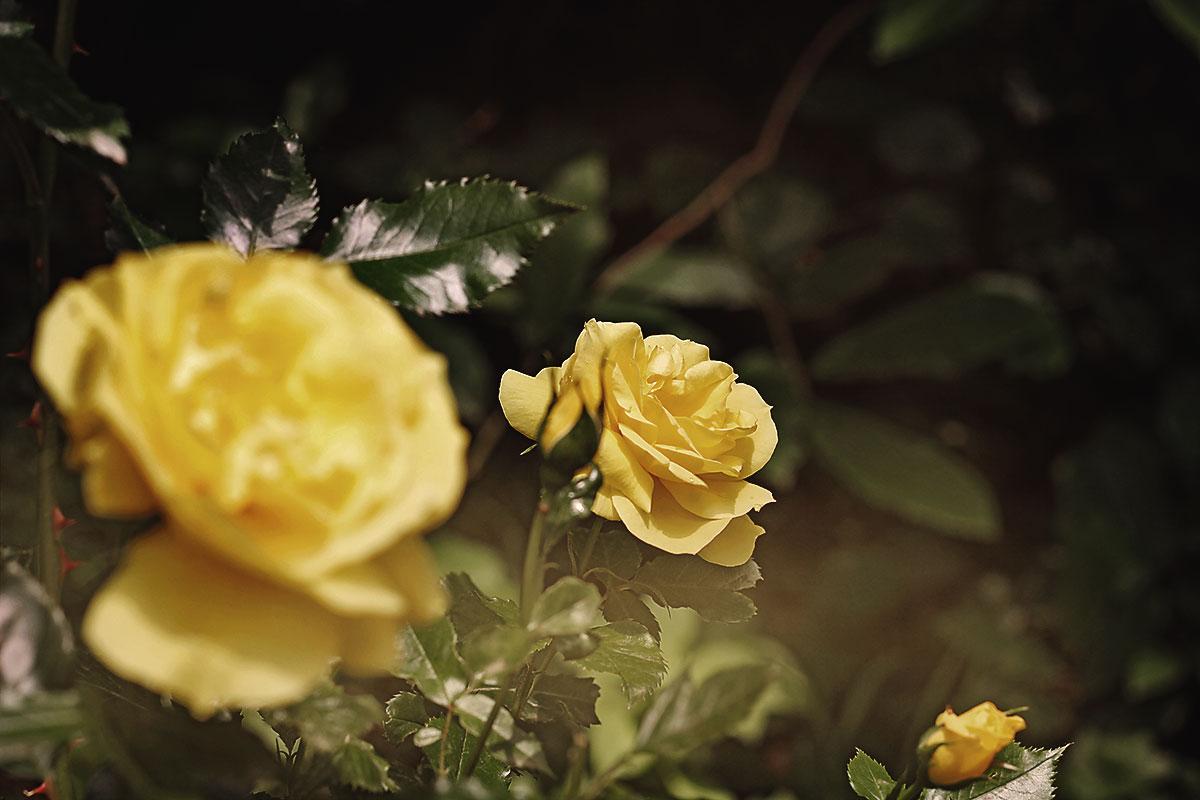 Einsame Blume in der Natur