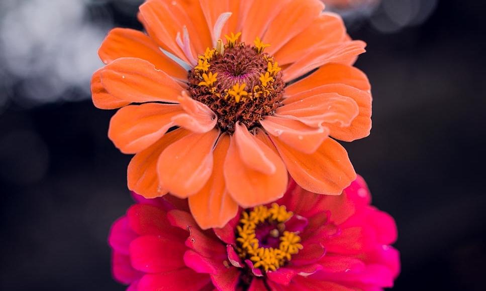 Flower Alto Adige