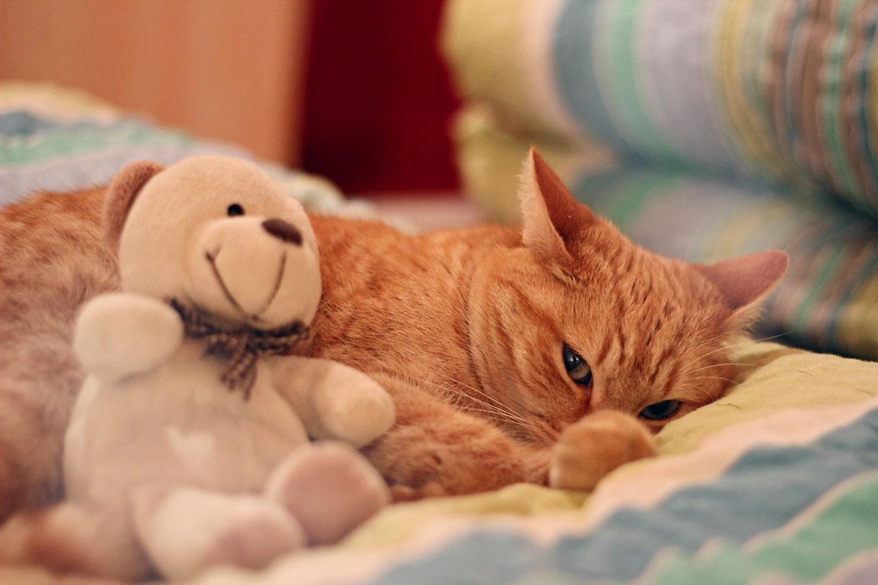 Katze und Bär kuscheln