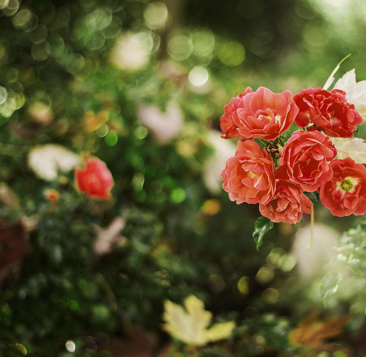 Natur Wunderblume Südtirol