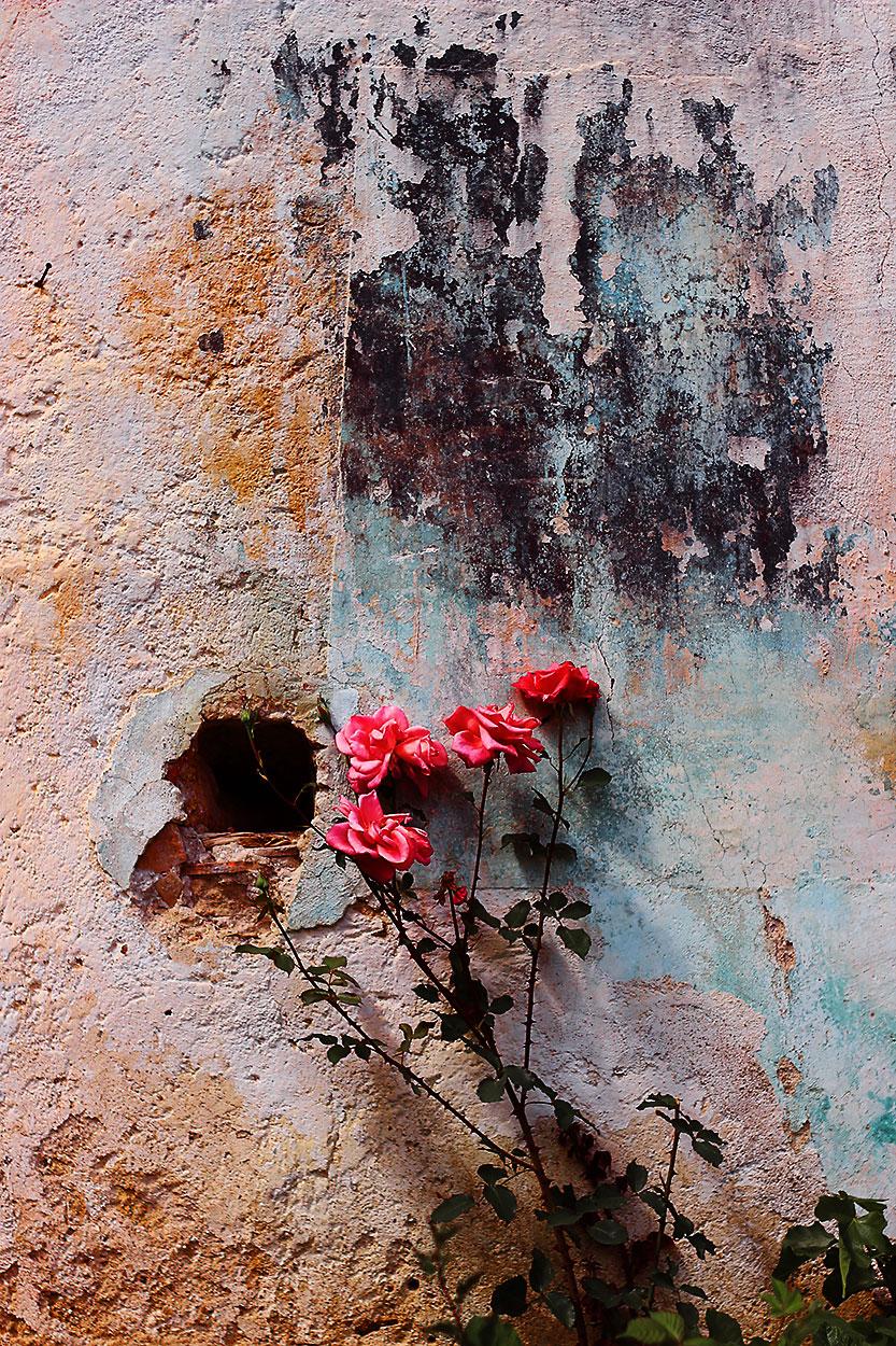 Wandmalerei Blumenkunst