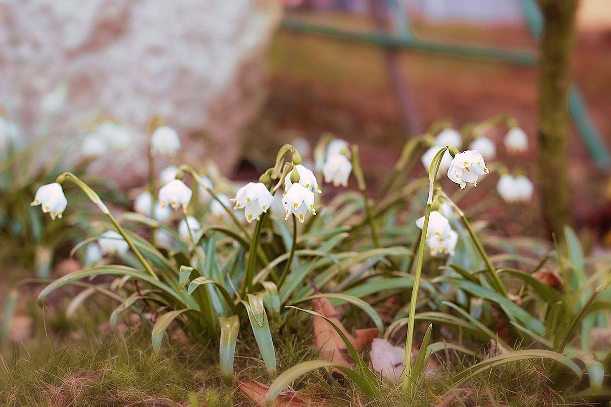 Frühlings Fotoshooting in Lana, Südtirol